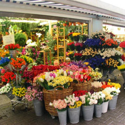 Greenwich blooms