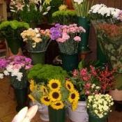 Mayo Floristas. Carmen Ducay