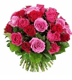 Rosas en frialdad